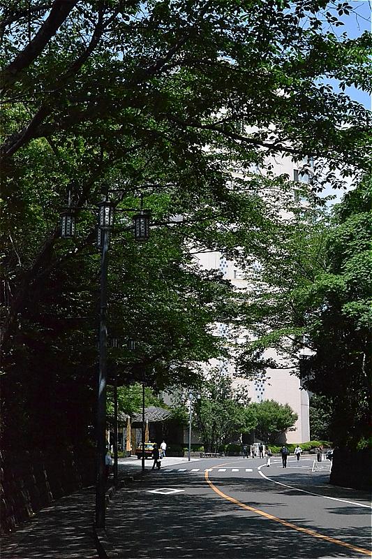 グランドプリンスホテル高輪への桜並木