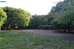 林試の森公園 芝生広場