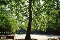 林試の森公園 プラタナスの広場