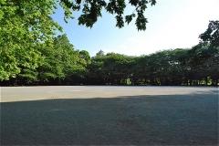 林試の森公園 大きな広場