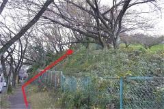 菅さくら公園へ階段を上る