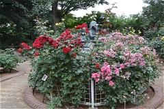 須和田公園:バラ園