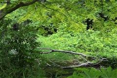 じゅんさい池緑地:水生植物保護地域