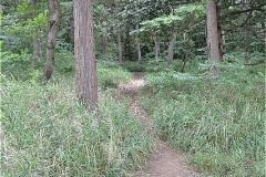 堀之内貝塚:踏み跡があちこちにあるが、東の方向へ上っていく