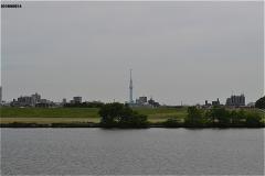 江戸川の向こうに東京スカイツリータワーが見える