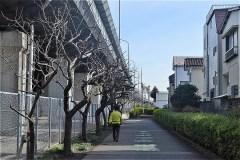 101-新田川