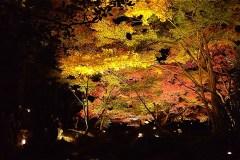大田黒公園の紅葉ライトアップ