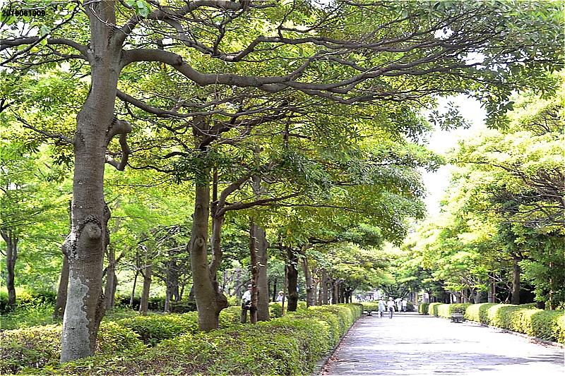 緑道。左に自転車専用道がある。