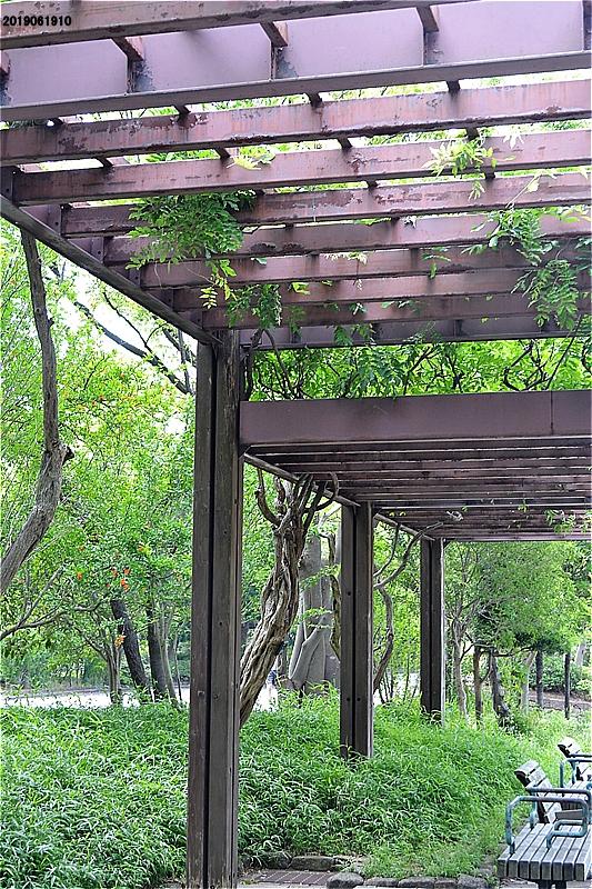 緑道のフジ棚