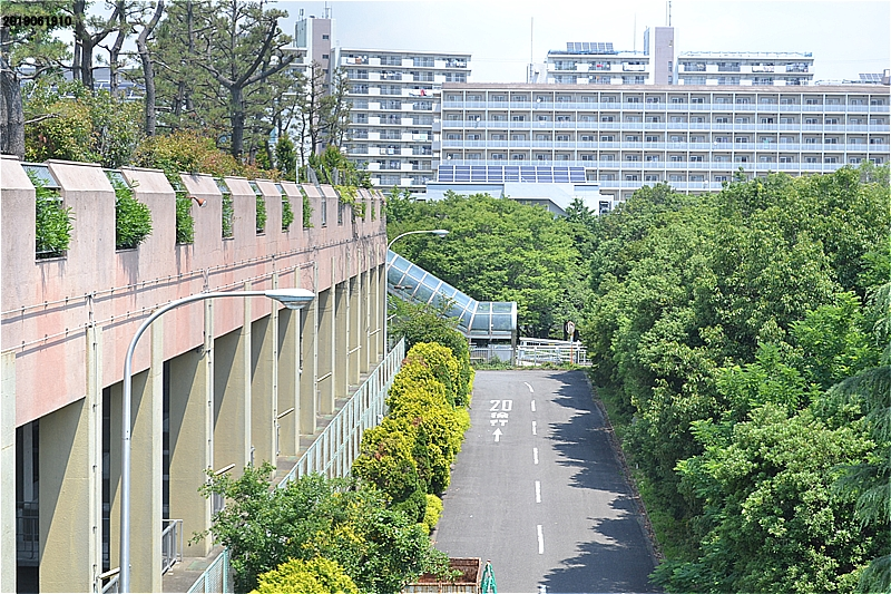 江戸川区臨海球技場から階段で緑道に戻る