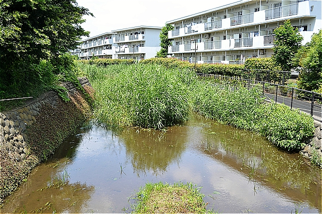 落合川水生公園の前のこぶし橋から落合川上流方向
