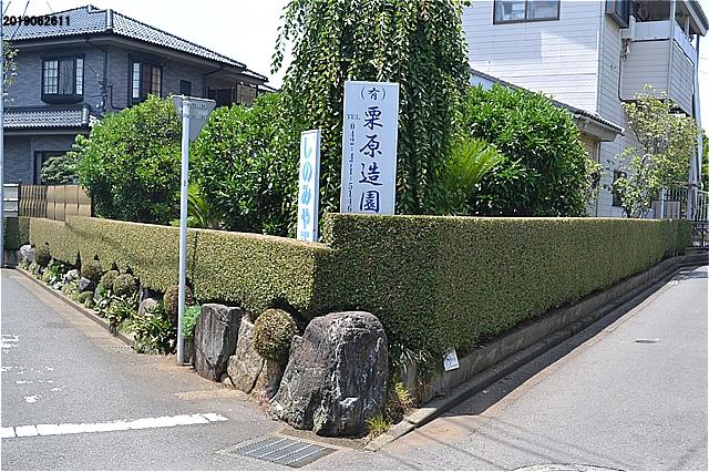 きれいな生垣。さすが造園業のお宅。