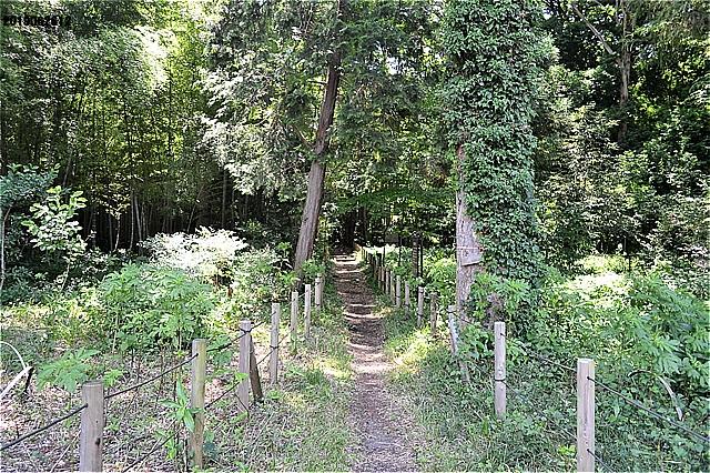 湧水点への林