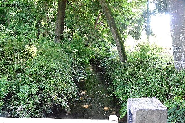 南沢氷川神社前の流れ