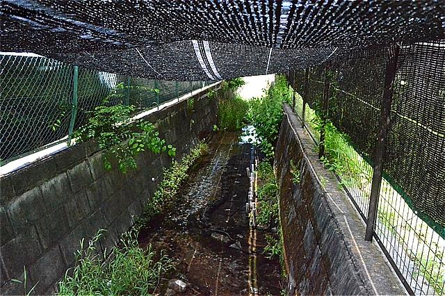 南沢第6緑地 (ホタル生育地)