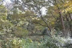 野川公園:バードサンクチュアリ