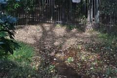 野川公園:わき水広場。湧き水が流れている