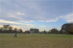 武蔵野の森公園:大芝生広場