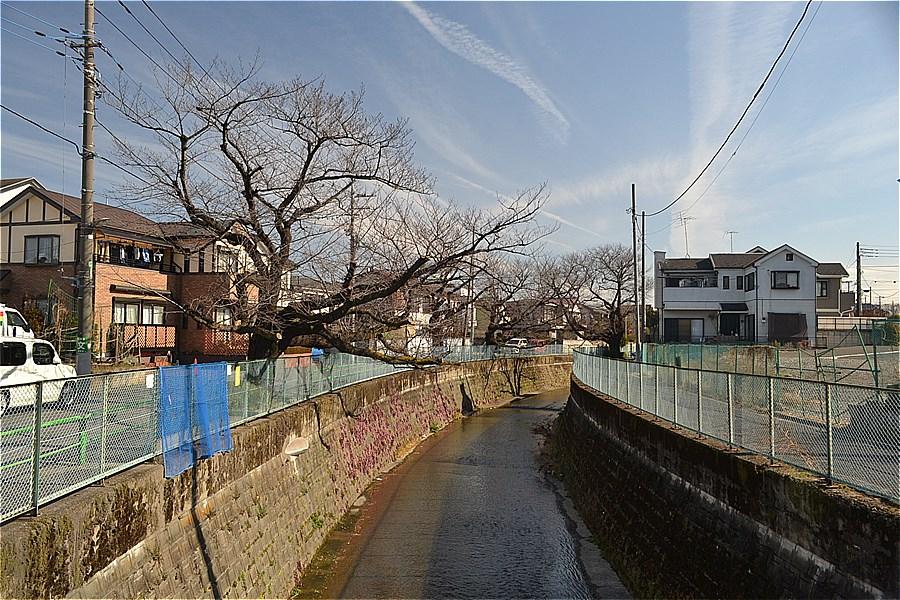 507-あかまつ緑地~中里泉公園