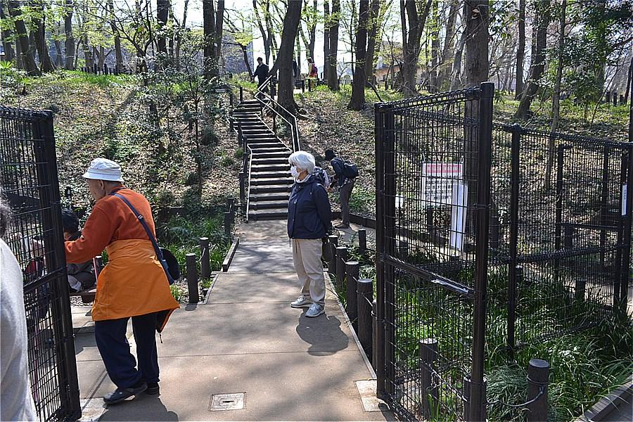 507-清水山の森のカタクリ開花
