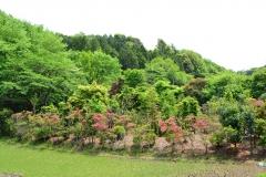 つつじ-四季の森公園
