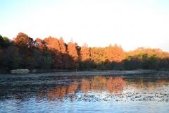 紅葉-三宝寺池
