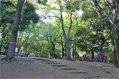 林試の森公園 森の広場