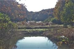 谷戸の風景