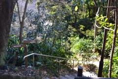 043-横浜自然観察の森へ下る
