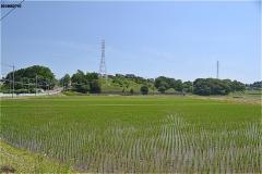 困窮におちいった佐倉宗吾の子孫を救済するため文化3(1806)年に佐倉藩から下付された。