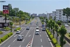緑道で、中央通りを渡る