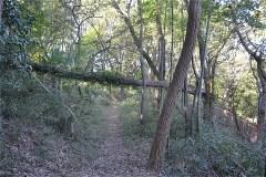 尾根に出る。2019年10月の台風による倒木。