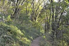 女子美の森