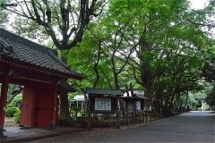 真間山弘法寺:約500年前に建てられた朱雀門(赤門)