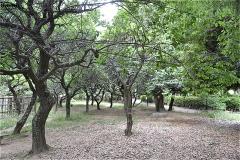 じゅんさい池緑地:梅林