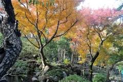 日本庭園等々力の紅葉 2019年12月10日