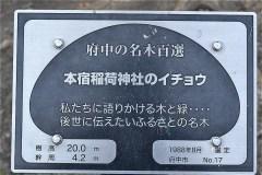 101-本宿稲荷神社のイチョウの説明