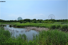 503-s-04-kasairinkai_birds_area-DSC_1872