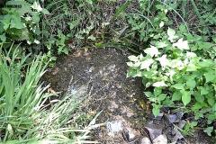落合川の湧水点