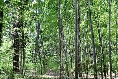 南沢樹林地