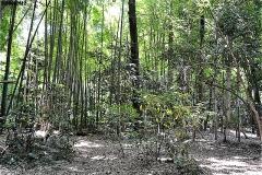 湧水点のある林