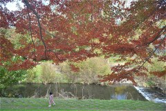 武蔵野公園:野川沿い