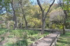 野川公園:自然観察園