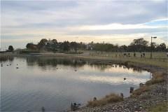 武蔵野の森公園:修景池