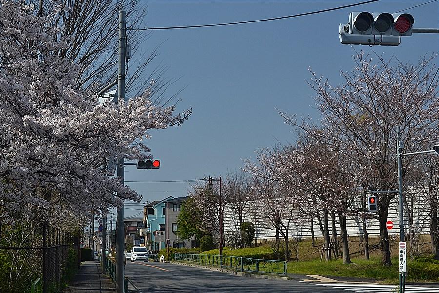 507-もみじ山公園入口(2020年3月26日撮影)