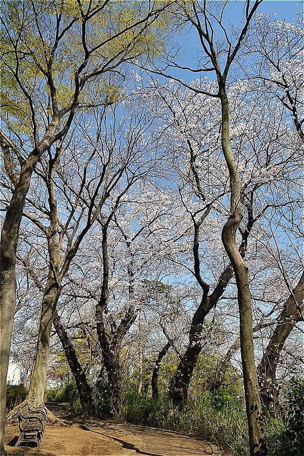 507-もみじ山公園(2020年3月26日撮影)