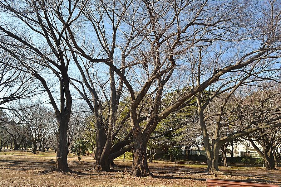 507-埼玉県営和光樹林公園