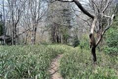 510-松山緑地保全地域